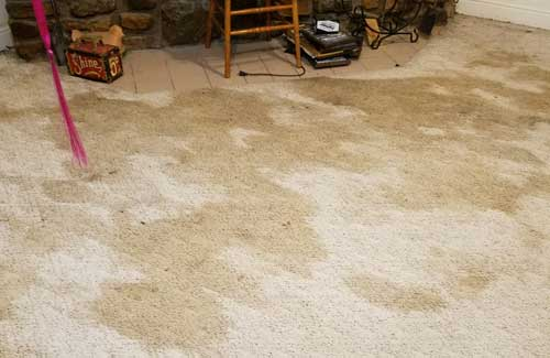 Anderson Cleaning and Restoration Commercial Carpet Cleaning